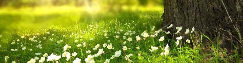 Virágos mező